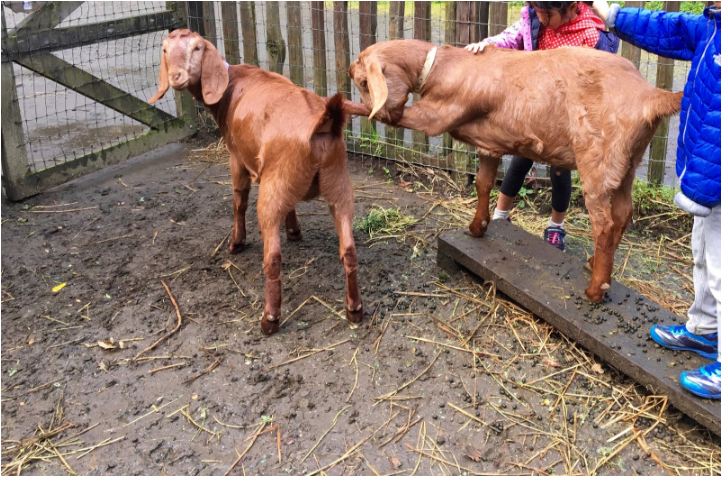 Farm Animals for PBL Project